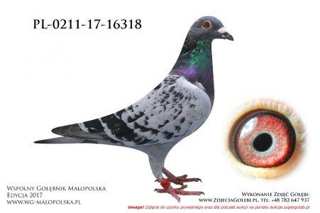 PL-0211-17-16318