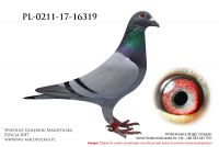 PL-0211-17-16319