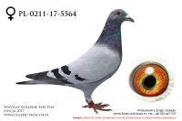 PL-0211-17-5564