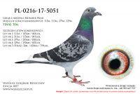 PL-0216-17-5051