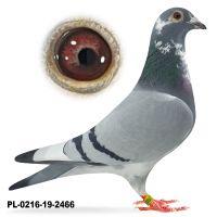 PL-0216-19-2466