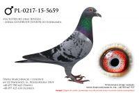 PL-0217-15-5659
