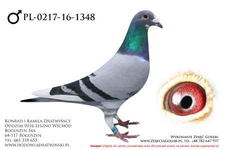 PL-0217-16-1348 - samczyk