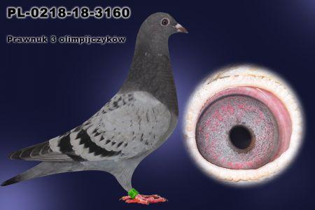 PL-0218-18-3160