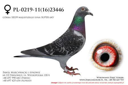 PL-0219-11(16)23446