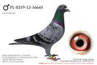 PL-0219-12-16645