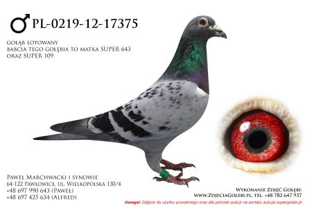 PL-0219-12-17375