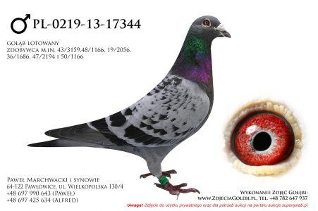 PL-0219-13-17344