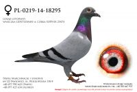 PL-0219-14-18295