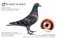 PL-0219-14-18312