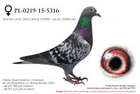 PL-0219-15-5316