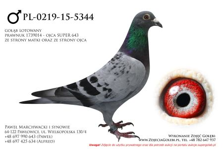 PL-0219-15-5344