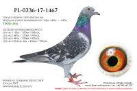 PL-0236-17-1467