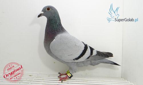 PL-0246-19-2449