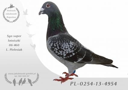 PL-0254-13-4954