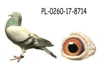 PL-0260-17-8714