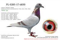 PL-0285-17-6850