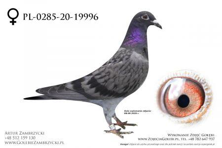 PL-0285-20-19996 - prawdopodobnie samiczka