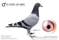 PL-0285-20-4081 - prawdopodobnie samczyk