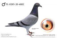 PL-0285-20-4082 - prawdopodobnie samczyk