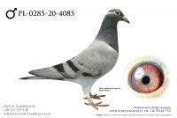 PL-0285-20-4085 - prawdopodobnie samczyk