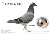 PL-0285-20-4086 - prawdopodobnie samiczka