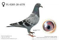 PL-0285-20-4370 - prawdopodobnie samiczka
