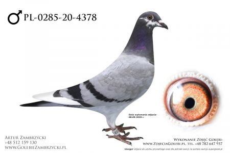 PL-0285-20-4378 - prawdopodobnie samczyk