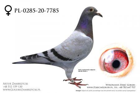 PL-0285-20-7785 - prawdopodobnie samiczka