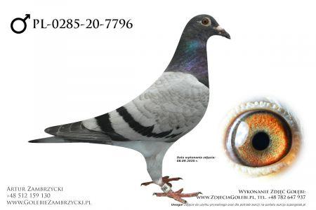 PL-0285-20-7796 - prawdopodobnie samczyk