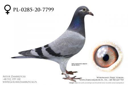 PL-0285-20-7799 - prawdopodobnie samiczka