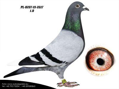 PL-0287-20-2617 - AUKCJA CHARYTATYWNA DLA KUBY