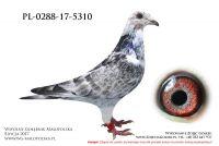PL-0288-17-5310