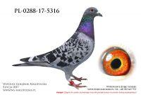 PL-0288-17-5316