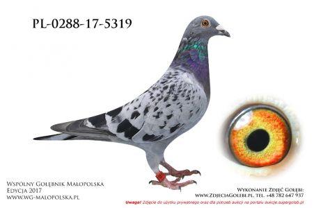 PL-0288-17-5319