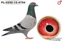 PL-0290-15-4794_samiec