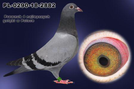 PL-0290-18-2882