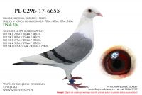 PL-0296-17-6655
