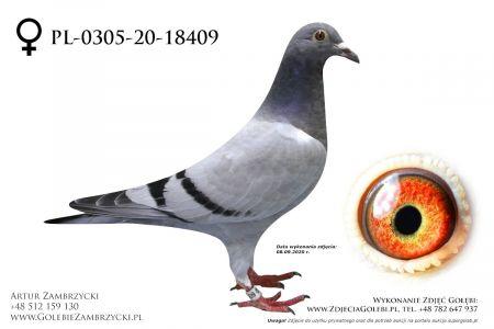 PL-0305-20-18409 - prawdopodobnie samiczka
