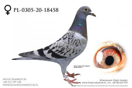 PL-0305-20-18458 - prawdopodobnie samiczka