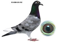 PL-0306-20 1783 - GRZEGORZ DRYGAŁA 0306 Międzyzdroje
