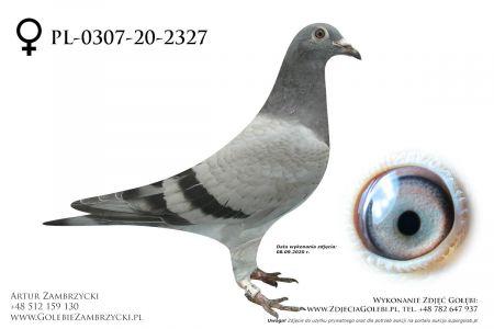 PL-0307-20-2327 - prawdopodobnie samiczka