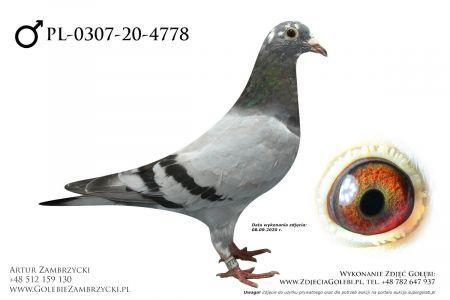 PL-0307-20-4778 - prawdopodobnie samczyk