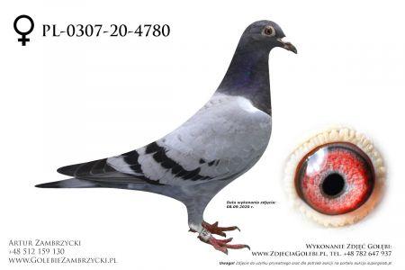 PL-0307-20-4780 - prawdopodobnie samiczka