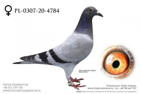 PL-0307-20-4784 - prawdopodobnie samiczka
