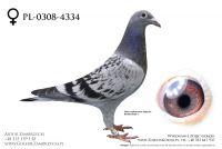 PL-0308-20-4334 - prawdopodobnie samiczka