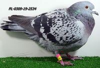 PL-0309-19-2534