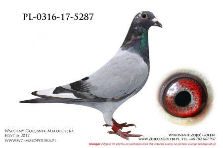 PL-0316-17-5287