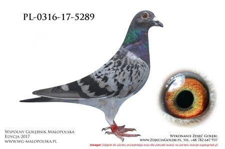 PL-0316-17-5289