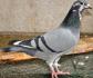 PL-0335-18-6813 J.POORTVLIET + L. DEREŃ